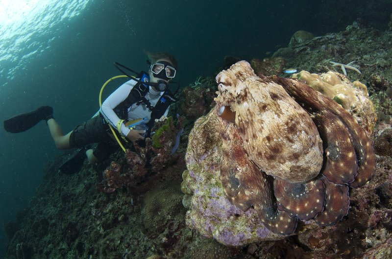 Me with an Octopus!! - Taken by Christoph