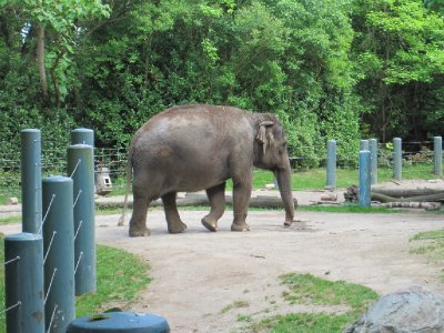 Elephant at Woodland Park Zoo, Seattle