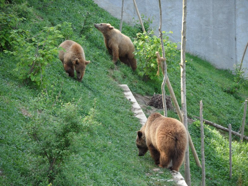 The Bears of Bern