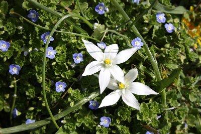 Damascus - Tishreen Gardens/Park - Spring flowers