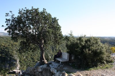 Qala'at Salah ad-Din - Forest all around