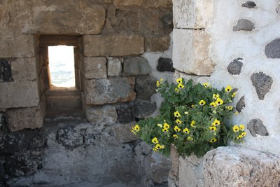 Qala'at Marqab - Flowers growing from the walls