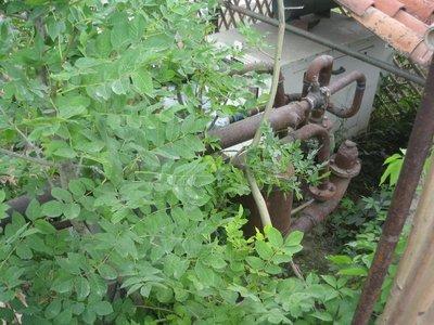 Gas_Plant.jpg