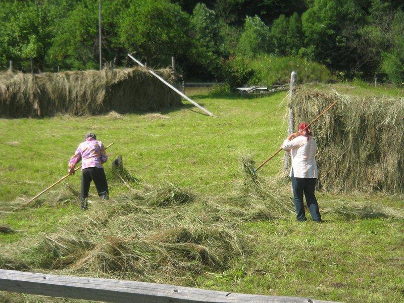 Romanian Hay Rakes