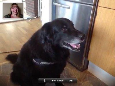 Shiba on Skype