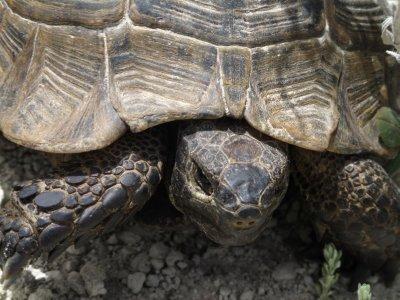 110502_Turtle_Wax.jpg