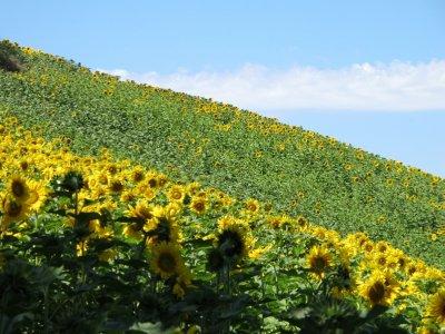 110623_Tuscany1.jpg
