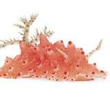 pink-slug-160.jpg