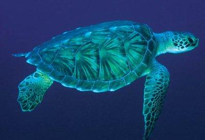 sea-turtle-2.jpg