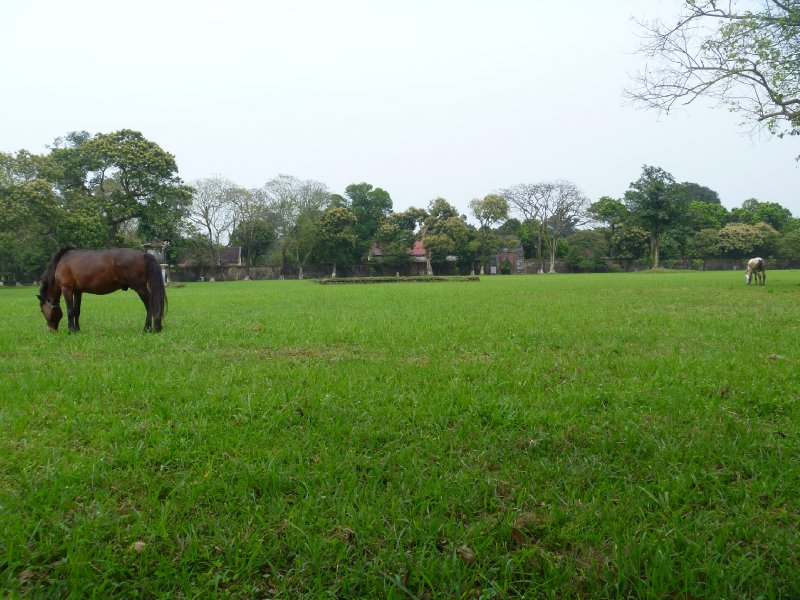 large_1_horses_in_citadel.jpg