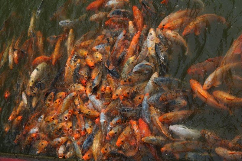 large_4_hungry_fish.jpg