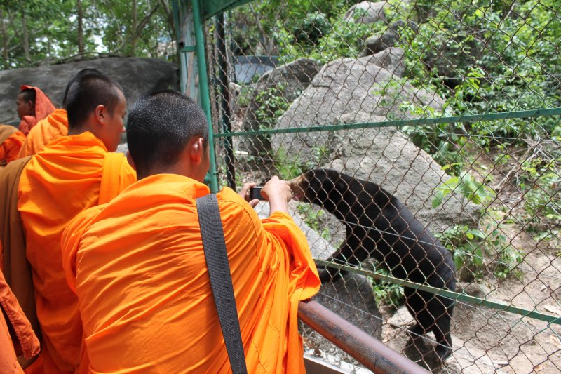 large_monks_at_the_zoo.jpg