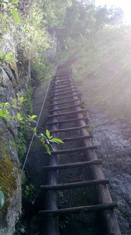 Ladders Galore