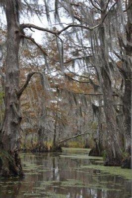23 - Swamp Tour