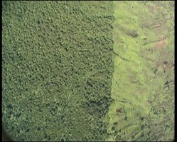 The DRC - Virunga NP border: An extreme example of deforestation (Not my photo)