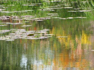 Monet7.jpg