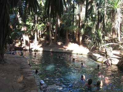 Croc-free, clear, warm water in Mataranka Thermal Pool