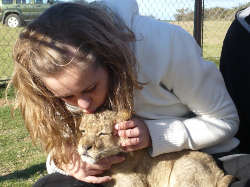 Baby Lion Kiss