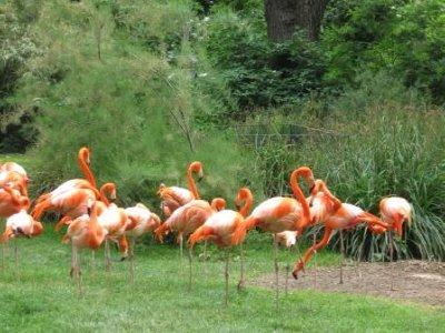 Flamingos_..rie_020.jpg