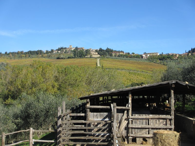 Chianti vineyard vista