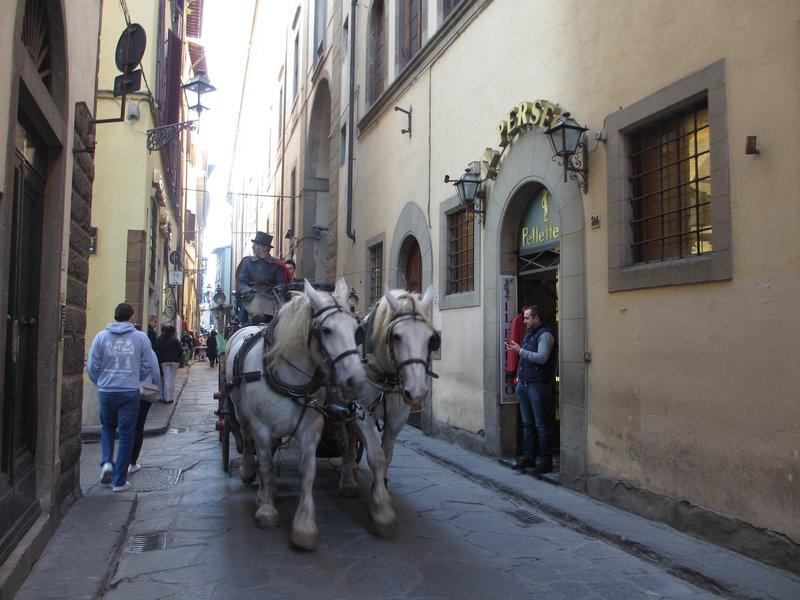 White horses, Florence