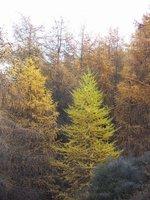 Autumn Colours, Lake George Scott Loop