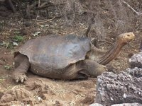 Lonesome George, Santa Cruz, Galapagos Islands