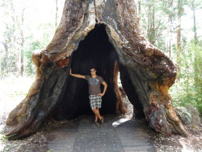 Meurig and tree