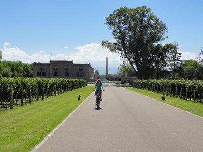 cycling wine tour Mendoza