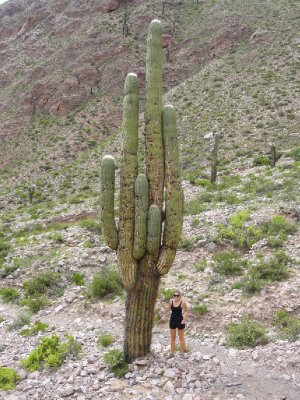 Sian & the giant cactus