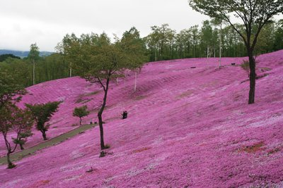 pink_moss_..ue__42_.jpg