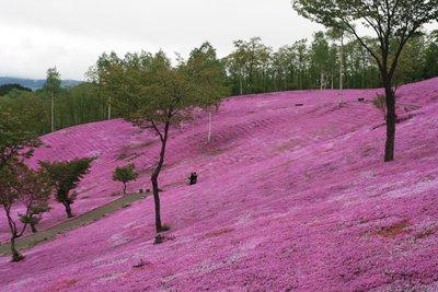 Pink Moss [takinoue]