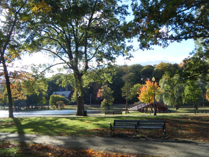Trees at Elm Park, Worcester, MA