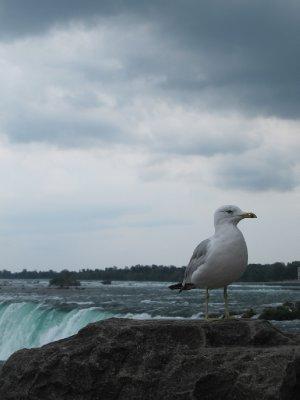 Hanging out at the top of Niagara Falls