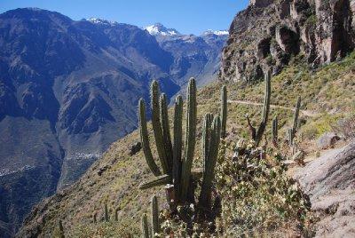 Colca Canyon - Landscape (6)