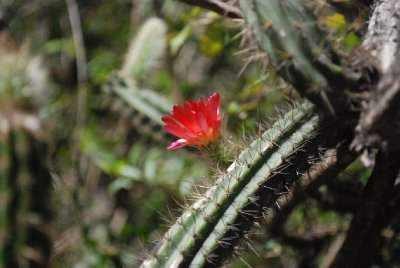 Flora and fauna on the Inca trail