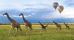 balloons-g..rengeti.jpg