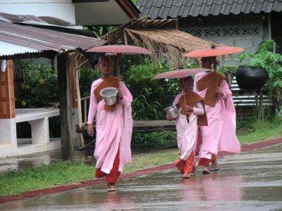 Pink Sanghlaburi