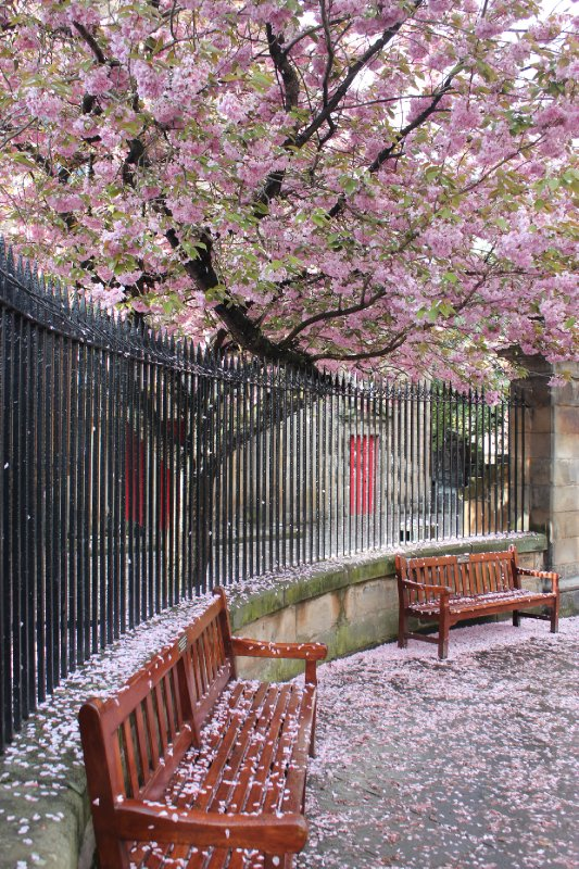 Edinburgh's pink snow