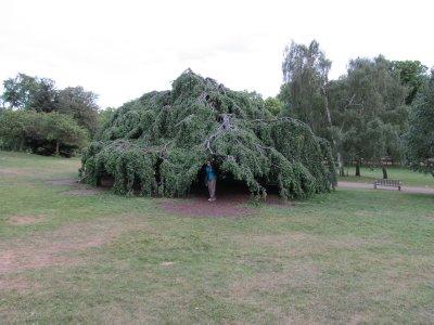Tree_Fort.jpg