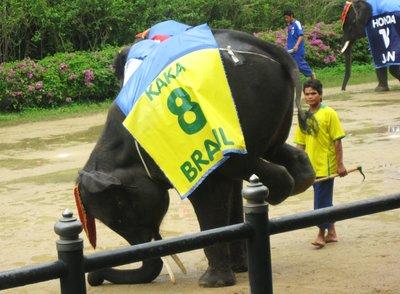 Cute Elephant doing his trick @ Samphran Elephant Zoo :)