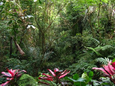 Goa Gajah - En plein dans la foret tropicale