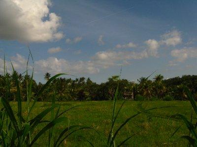 Vue sur les rizieres