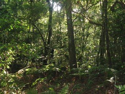 Descente dans la foret tropicale