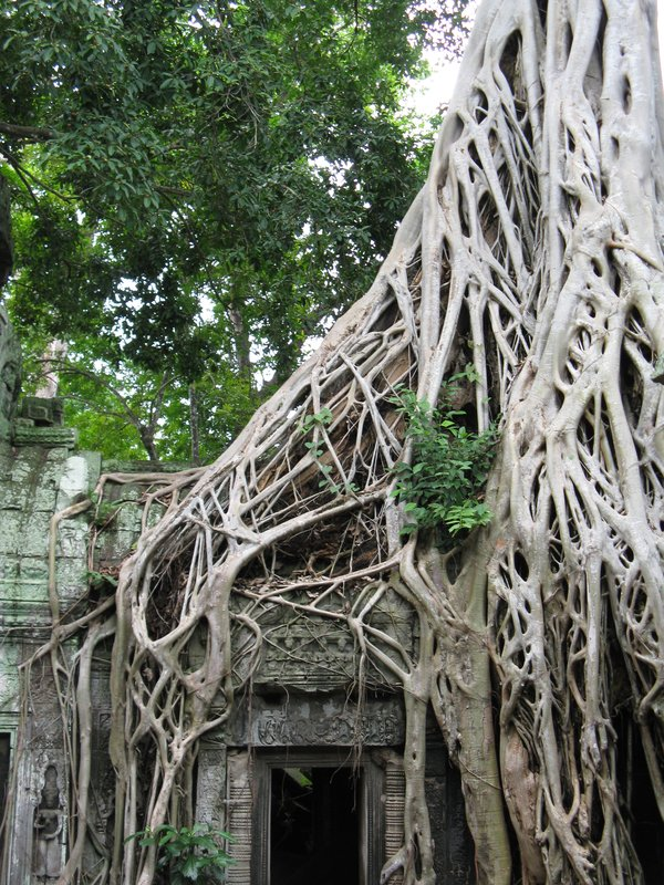 Temple de Ta Prohm