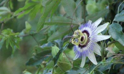 St Paul de Vence: Interesting Provencal Flora