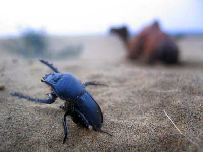 ..big bug..