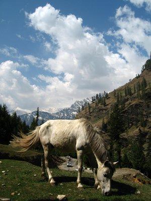 ..horsey ..