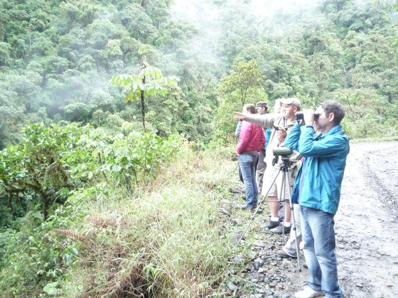 Spying the wooly monkeys Manu Jungle