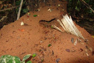 Het huis van de mieren: indrukwekkend